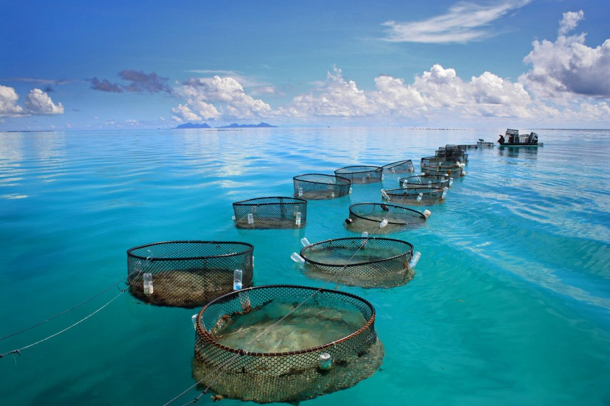 Fisheries Science on display at a marine fishery in tropical sea
